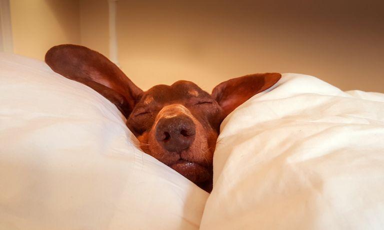 Sleep, sleep, glorious sleep!